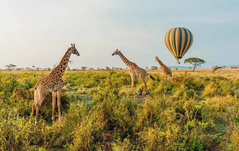 7 Day Wildlife Safari Adventure