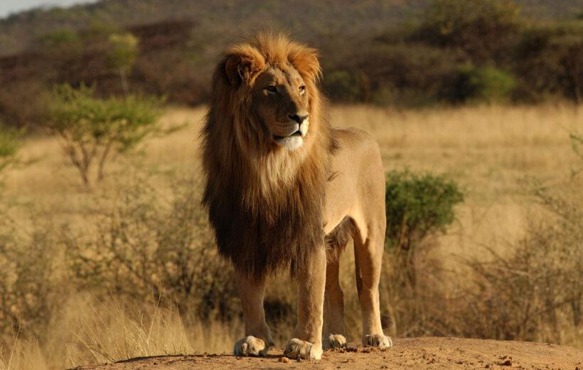 5 Day Big Five Safari in Tanzania