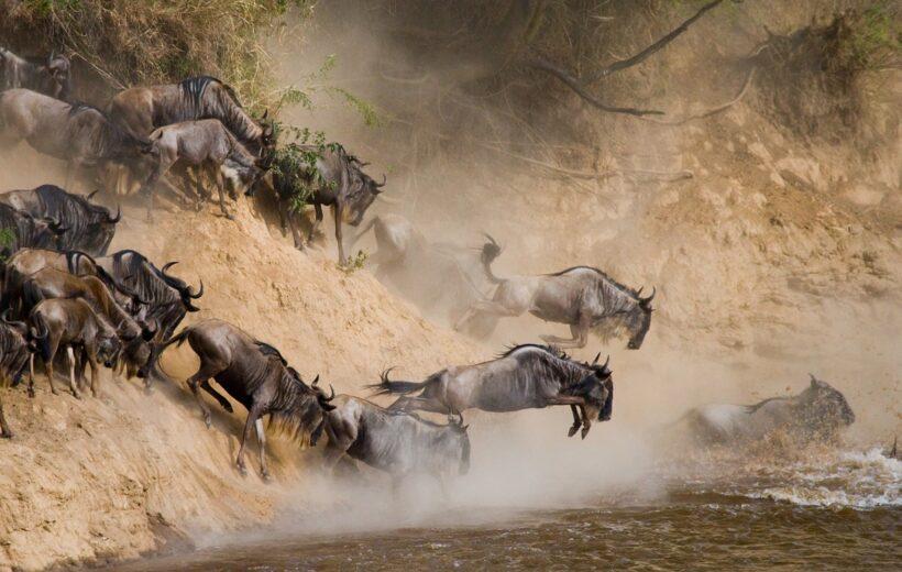 6 Day Serengeti Wildebeest Migration Safari